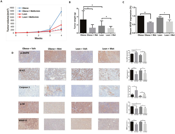 Metformin inhibited ovarian tumor growth in obese and lean KpB mice.
