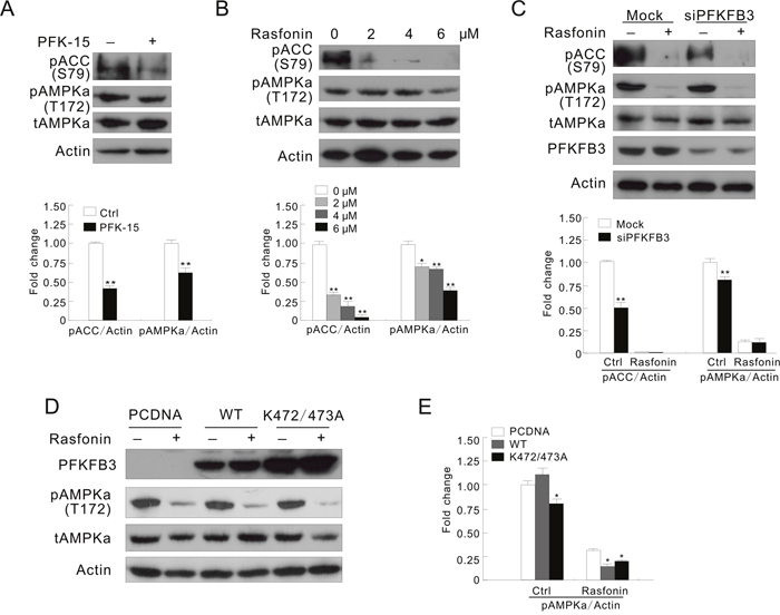 AMPK is involved in the PFKFB3-regulated autophagy process.