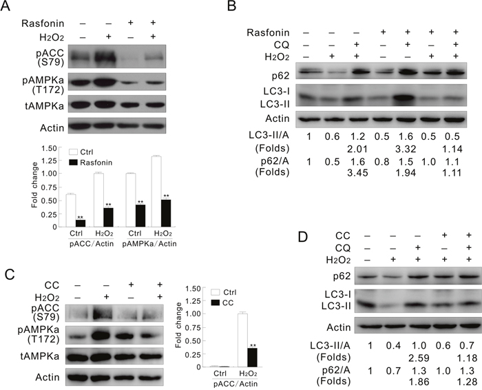 Inhibition of AMPK mimics the effect of inhibition of PFKFB3.
