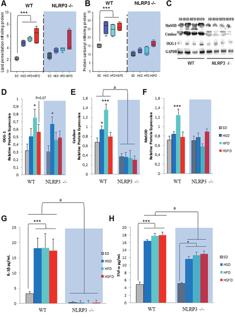 Nlrp3 signaling elimination protects against oxidative and inflammatory effects of the HSD, HFD and HSFD diets.
