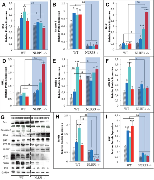 Changes in apoptosis and autophagy in response to HSD, HFD and HSFD diets in WT and NLRP3 -/- mice.