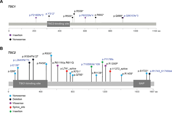 Map of TSC1 and TSC2 mutations identified in 10 and 19 SEGA tumors, respectively.