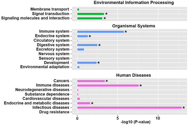 Kyoto Encyclopedia of Genes and Genomes (KEGG) pathway classification enrichment analysis of differentiated expressed genes.