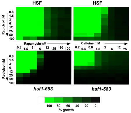 Fig 1: TreeView representation of the growth (46h 28°C) of strains NSY-A (HSF) and NSY-B (