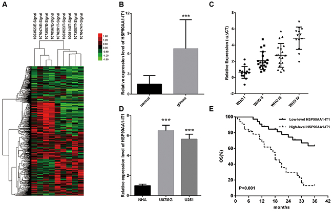 The expression profiles of HSP90AA1-IT1 in the glioma specimens and cell lines.