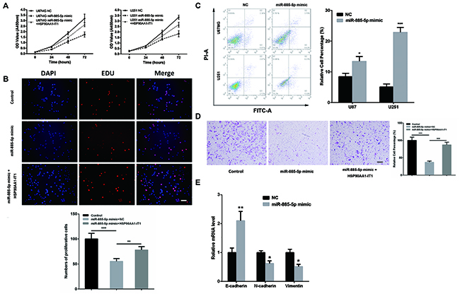 The inhibitory role of HSP90AA1-IT1 in the biological functions of miR-885-5p in the glioma cells.