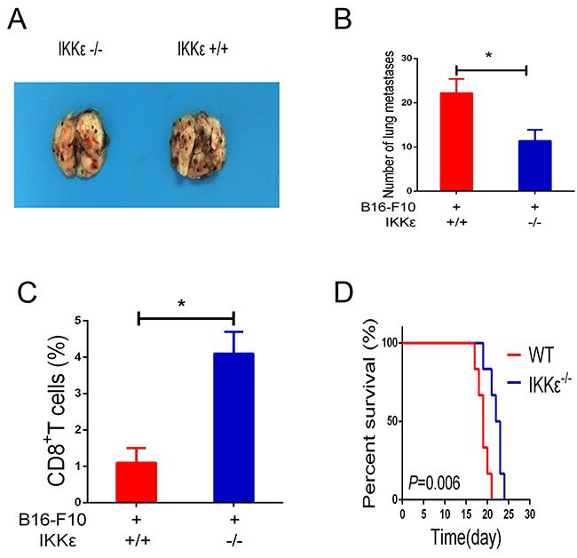 Knockdown of IKKε elevates T-cell antitumor immunity.