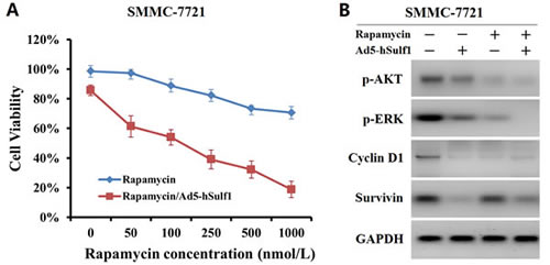 hSulf-1 produces a synergic inhibitory effect on HCC cell proliferation and signaling combined with rapamycin.