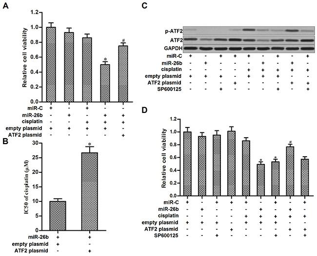 Overexpression of miR-26b sensitized Hep-2/R to cisplatin through inhibiting the phosphorylation of ATF2.