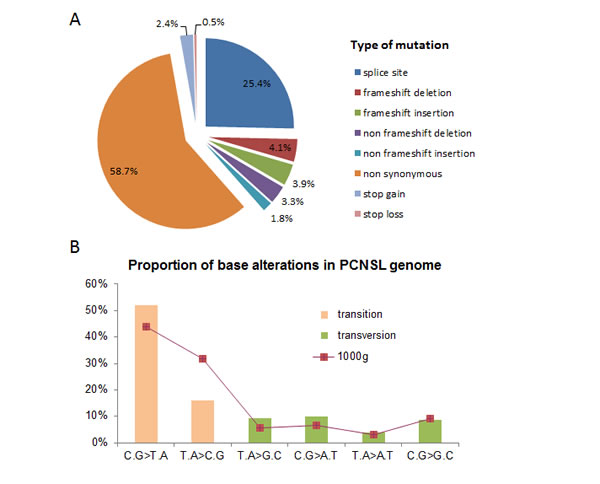 Mutation pattern of PCNSL samples investigated by whole exome sequencing.