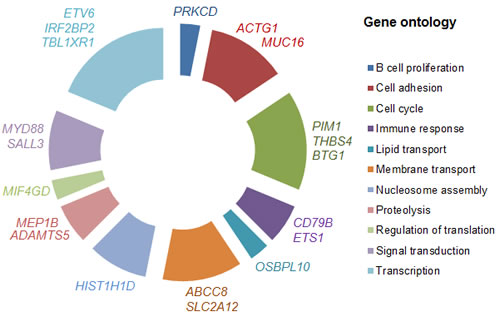 Gene ontology of PCNSL genes.