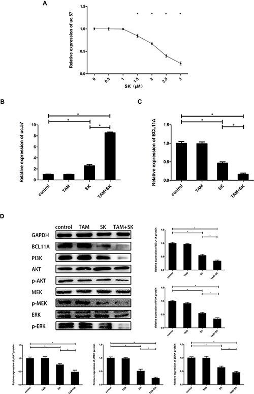 SK reduces TAM resistance of breast cancer cells by upregulating uc.57 and downregulating BCL11A and related PI3K/AKT and MAPK pathways.