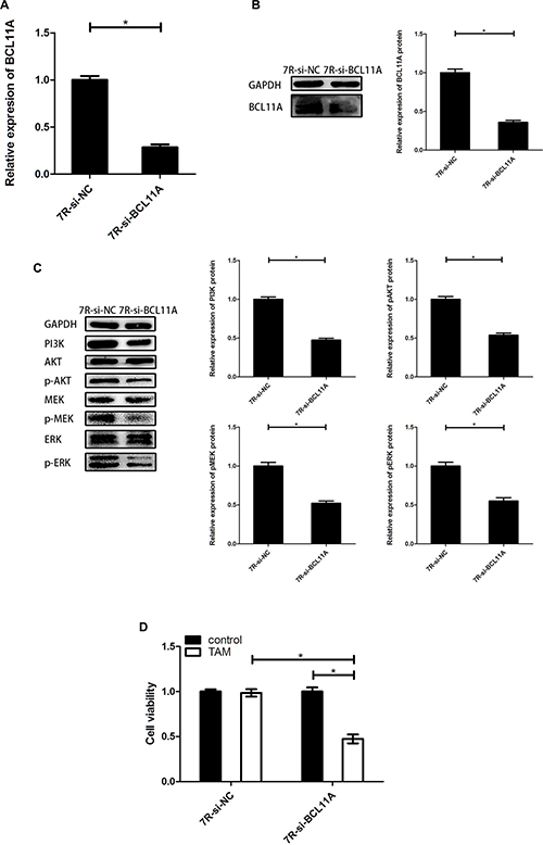BCL11A knockdown reduces TAM resistance by inhibiting PI3K/AKT and MAPK signaling pathways.