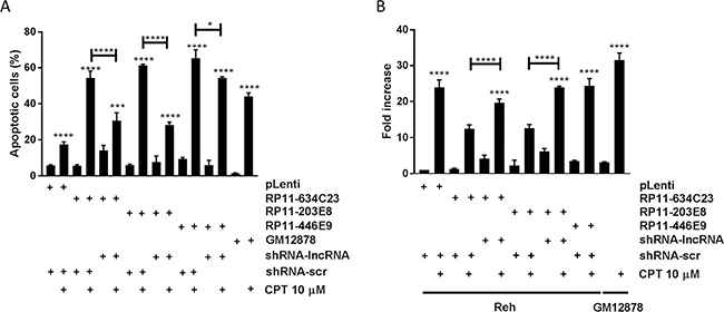 The lncRNAs RP11-624C23.1 and RP11-203E8 are involved in camptothecin resistance and DNA damage response.
