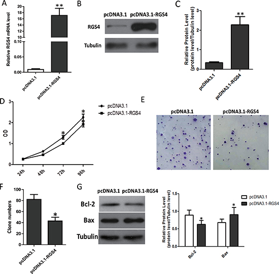Overexpression of RGS4 significantly inhibits melanoma cell proliferation.