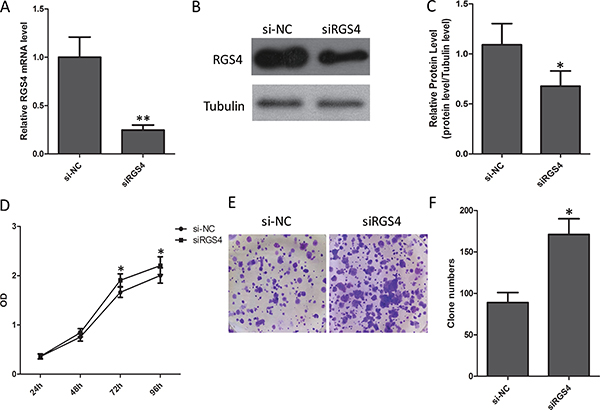 Reduction of RGS4 significantly promotes melanoma cell proliferation.