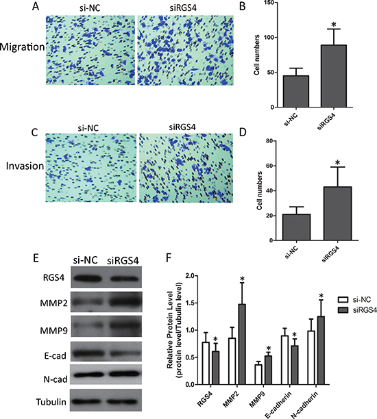 Low expression of RGS4 increases melanoma cell migration and invasion.
