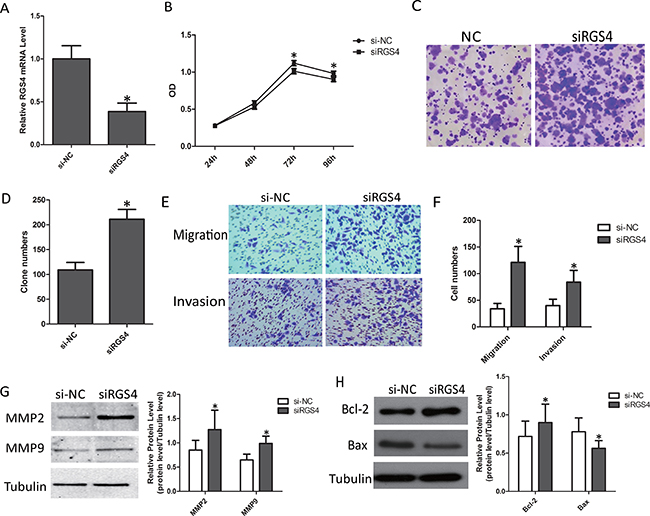 Knockdown of RGS4 significantly promotes cell proliferation, migration and invasion in M14 cell lines.