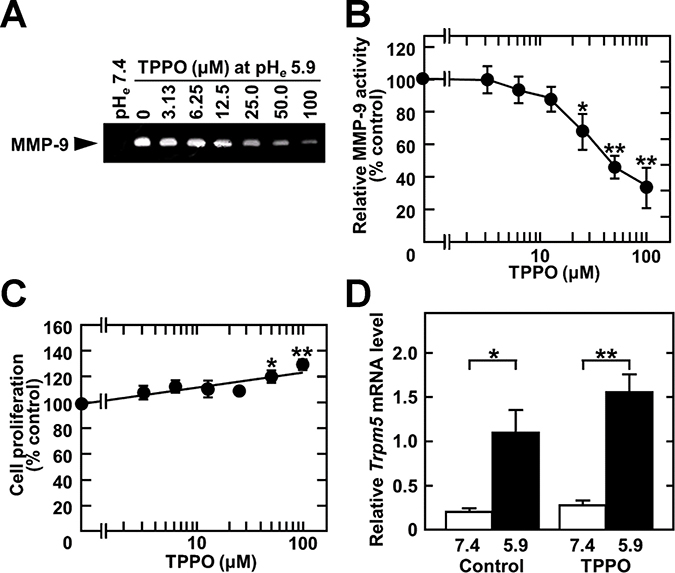 TPPO treatment inhibits acidic pHe-induced MMP-9 production.