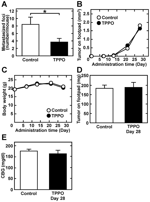 TPPO administration reduces pulmonary metastasis without affecting tumor growth, body weight, or CBG.