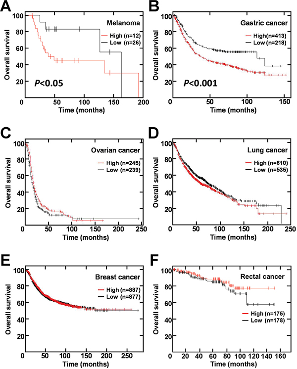 TRPM5 mRNA expression correlates with survival rate of patients with melanoma and gastric cancer.