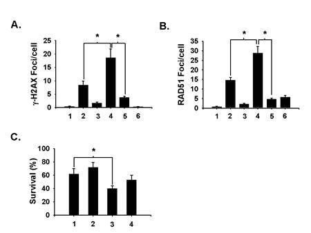Fig 5: Aphidicolin suppresses niraparib's ability to enhance H