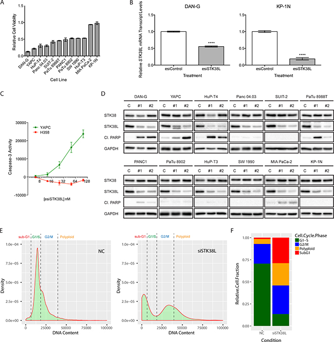 STK38L promotes cell survival in a subset of PDAC cell lines.