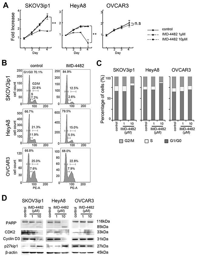IMD-4482 suppressed proliferation and induced G0/G1 cell cycle arrest and apoptosis in PAI-1-positive ovarian cancer cells.