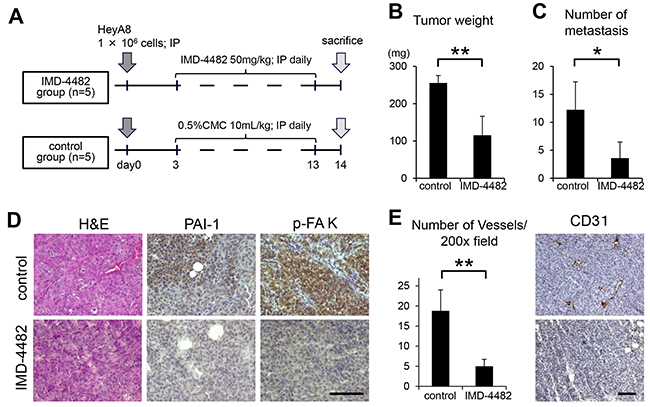 IMD-4482 inhibits peritoneal dissemination of ovarian cancer cells through inhibition of FAK phosphorylation and intratumoral vessel formation.