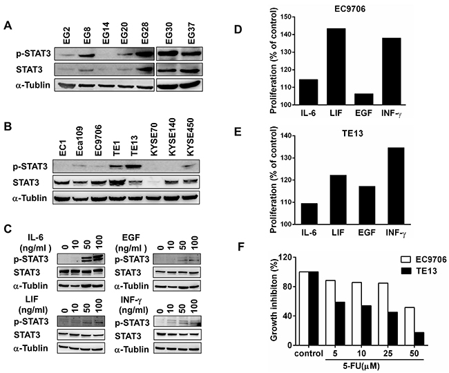 STAT3 is activated in a subgroup of esophageal squamous cell cancers.