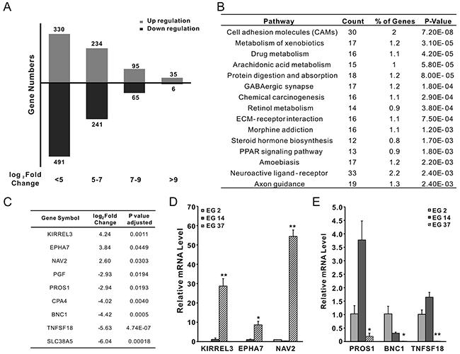 RNAseq analysis of xenografts from primary tumors EG2, EG14, and EG37.