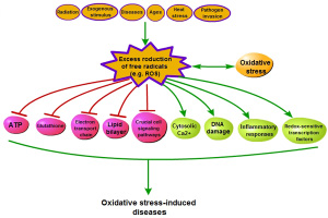 The process of oxidative stress-induced diseases.