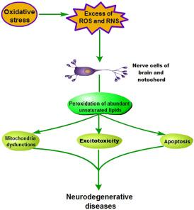 Pathogenesis of oxidative stress-induced neurodegenerative diseases.