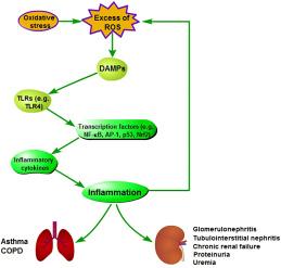 Pathogenesis of oxidative stress-induced inflammation.