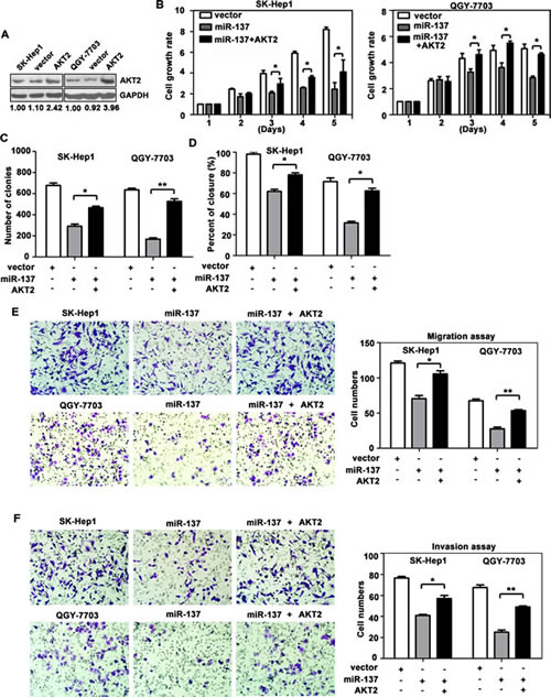 Reintroduction of AKT2 abrogates miR-137-induced suppression of HCC growth and metastasis.