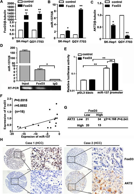 miR-137 is directly regulated by the transcription factor FoxD3.