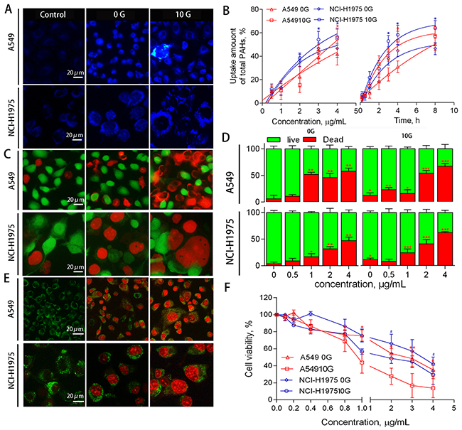 A549 and NCI-H1975 cell PAH uptake, viability, and death phenotype.