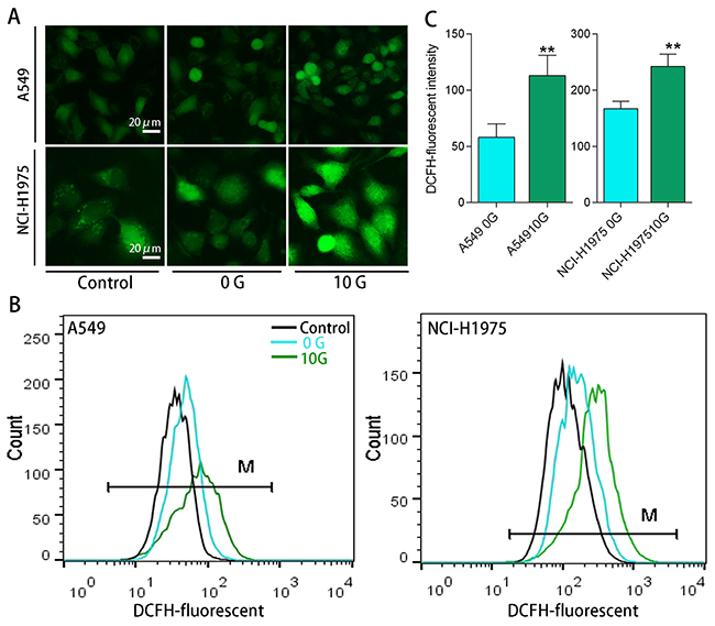 Intracellular ROS levels determined using an H2DCFDA ROS probe.