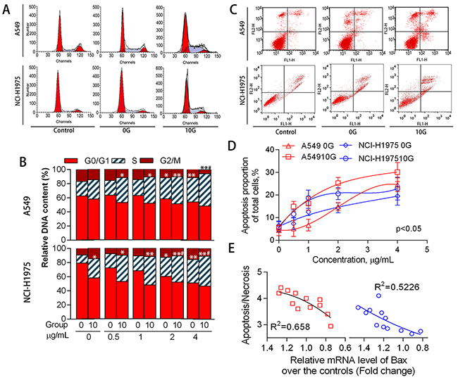 Cell cycle distribution and apoptosis as mediated by acute and chronic PAH exposure.