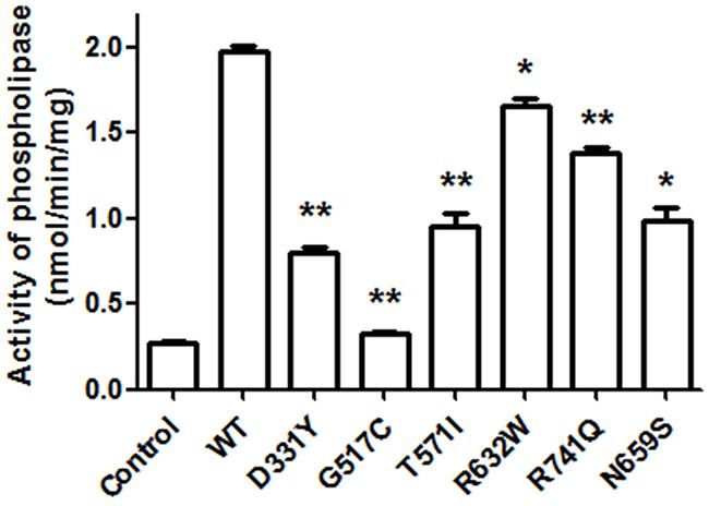 PARK14 mutant PLA2G6 exhibits an impaired enzyme activity of phospholipase A2 (PLA2).