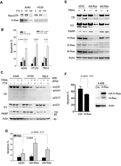 Inhibition of H-Ras activity sensitizes TRAIL-resistant cells to TRAIL-induced apoptosis.