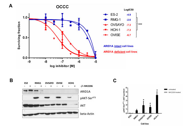 Loss of ARID1A expression is associated with high sensitivity to the AKT-inhibitor MK-2206 in ovarian clear cell carcinoma cell lines.
