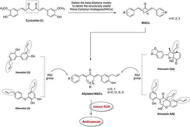 Structural design of allylated mono-carbonyl analogs of curcumin (MAC).