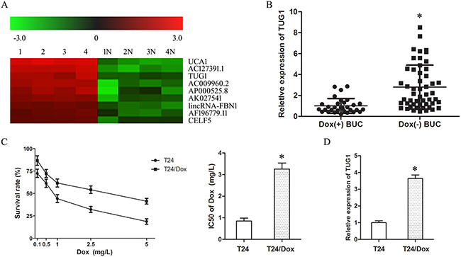 Up-regulation of TUG1 was correlated with doxorubicin resistance of BUC.