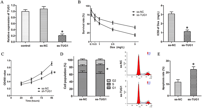 Knockdown of TUG1 inhibited Dox resistance in T24/Dox cells.