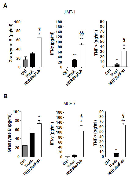 HER2bsFab efficacy against trastuzumab-refractive cells acts through an efficient activation of NK cells.