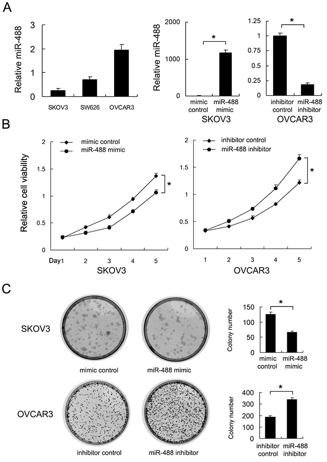 Effects of miR-488 on cell proliferation and invasion in ovarian cancer.