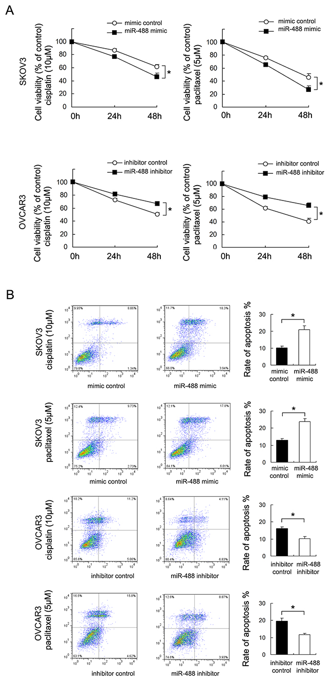 miR-488 reduces chemoresistance to cisplatin and paclitaxel.