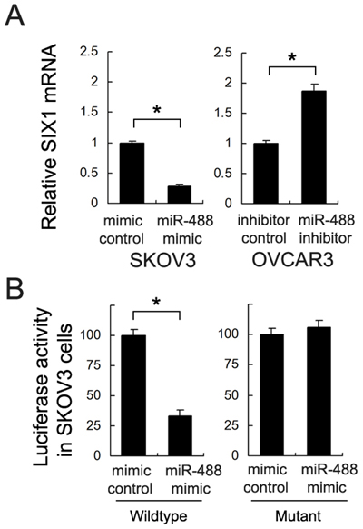 Six1 is a direct target of miR-488 in ovarian cancer cells.