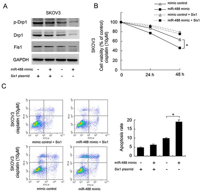miR-488 regulates Drp1 signaling and chemoresistance through Six1.